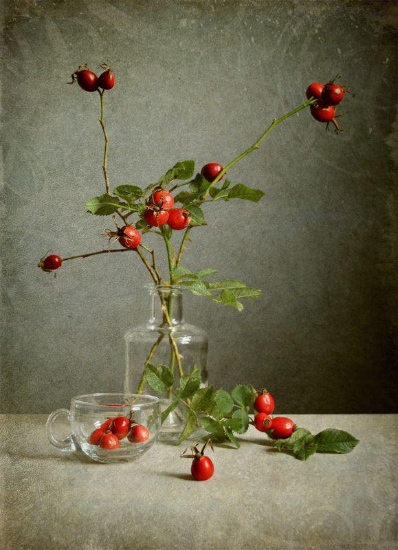 photo: Осенний шиповник | photographer: Jolanta Brigere | WWW.PHOTODOM.COM