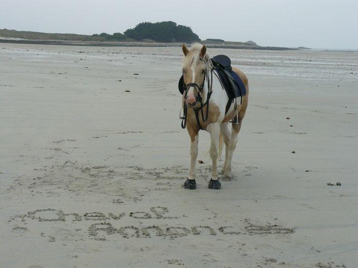 Seul sur le sable, les yeux dans l'eau... #cheval #plage #chevalannonce