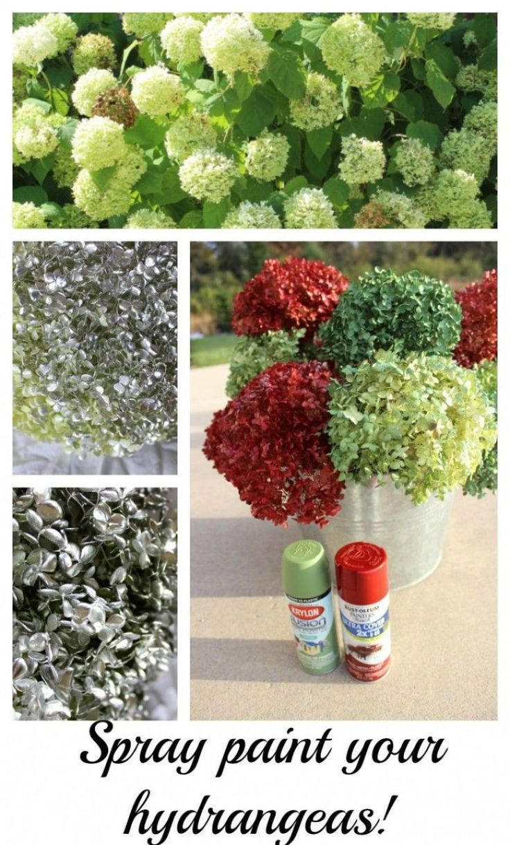 Spray paint hydrangeas now! Use later. I love either having a bunch of silver hydrangeas or using red and green.  It's amazing what spray paint can do! - Momcrieff