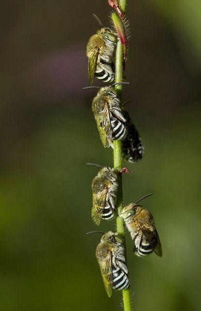 Pčela - Page 2 5b42b4dda959a642d5d8cc3ec8bb655a