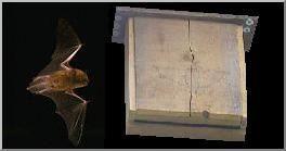 Construire un nichoir à chauves-souris. Plans Dimensions Conseils