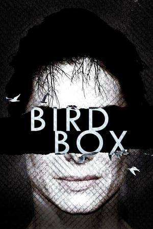 Bird Box Stream