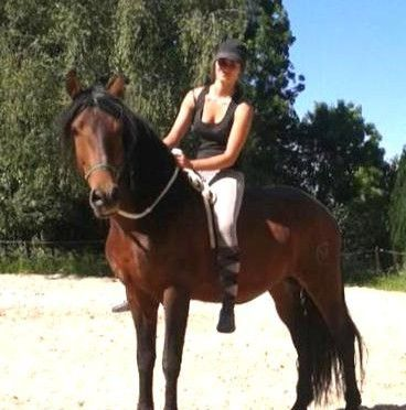 Demi pension sur cheval PRE bai excellent pour dressage 8999350