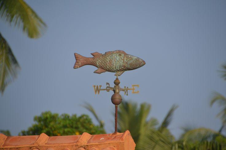 The fishy weather vane