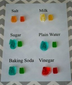 Great way to use scientific processing skills with this Gummy Bear Experiment. Easy and not too messy of a project to do with the students.