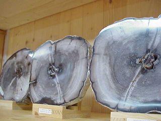 Holz versteinert versteinertes Holz