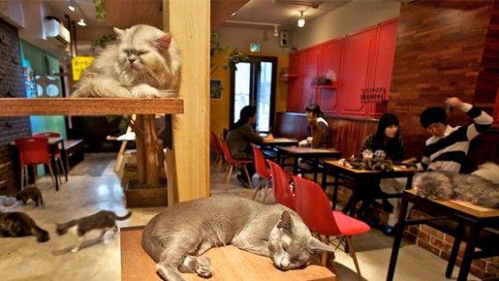 A Torino, in via Napione, apre un altro caffé dove i gatti sono i protagonisti: coccolarli aumenta il nostro livello di serotonina