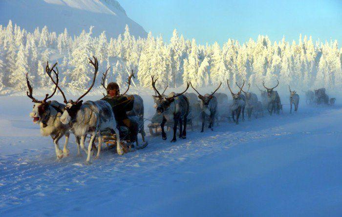 kaeltester ort winter hirsch einwohne