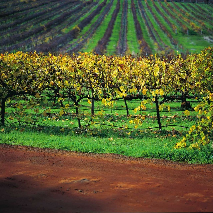 Cool coastal climate of Australia where wines are oozing finesse.