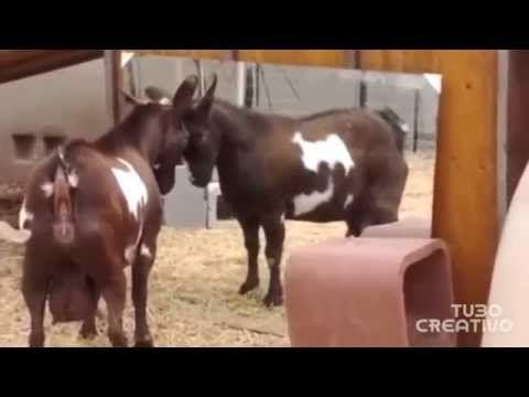 Animali più divertenti del mondo 2015. Animali pazzi, buffi e divertenti compilation #1 - YouTube