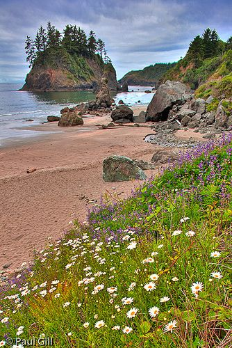 Wildflowers and Sea stacks at Trinidad State Beach, CA
