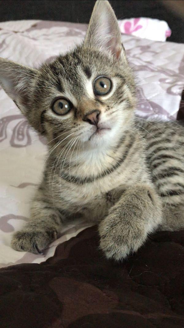 Baby Katze Zu Vergeben Katzen Aus Wertheim Baby Katzen Katzen Kaufen Baby Katzen Kaufen