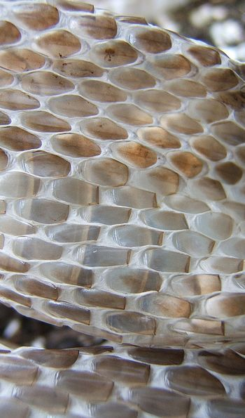Snakeskin Textures - brown ombre colour inspiration   Image via flickr.com