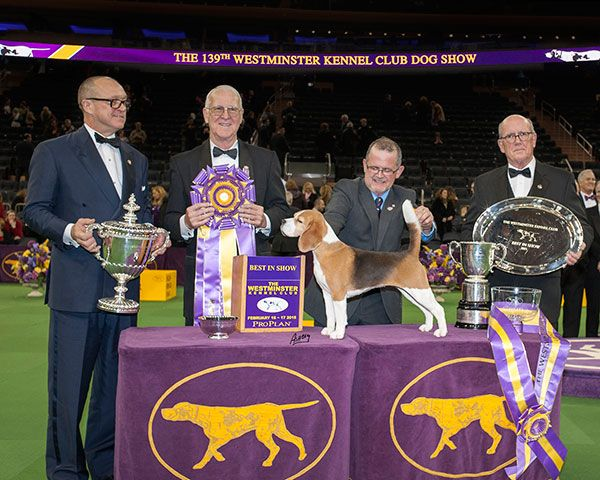 Westminster Kennel Club Dog Show Winners