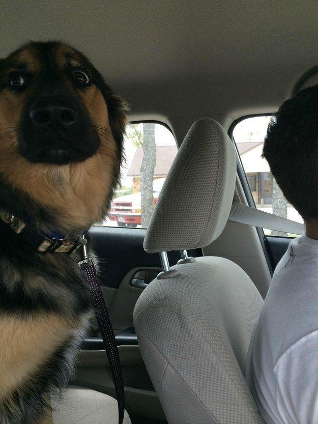 Best Dogs Going To Vet Images On Pinterest The Vets Buz Feed - 15 times dogs realized they were going to the vet instead of the park their reactions are priceless