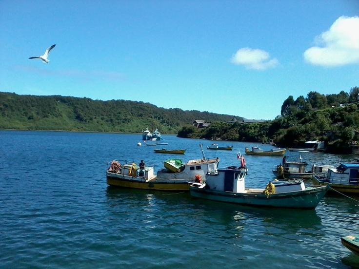 La gaviota no quería posar, pero al final la pillé de sorpresa!! En Angelmó, Puerto Montt.