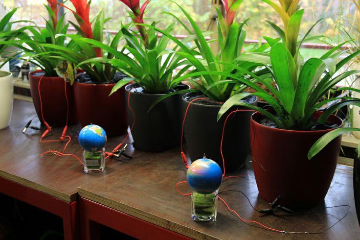 Plant-e: un nuovo sistema per produrre energia pulita dalle piante che crescono