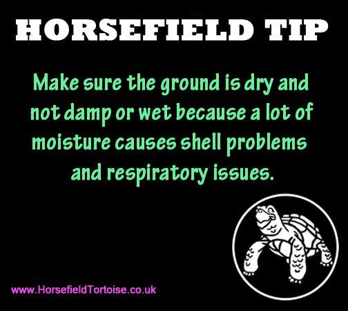Horsefield Tip