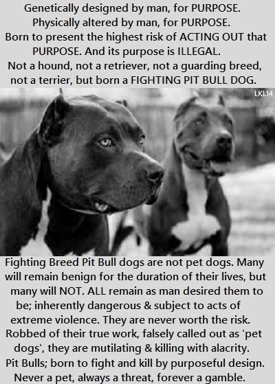 62 Best Pit Bull Victims Images On Pinterest  Pit Bull -1950