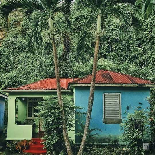 """Jamaica countryside living...so beautiful...a cozy Jamaican home from my research for """"Boogie"""". Love the color!"""
