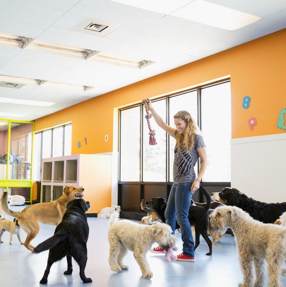 Pet Boarding And Sitters What To Know Before You Book Pet