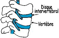 coonne vertébrale en vue latérale