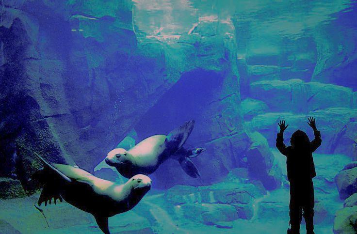#AlaskaSeaLife #Center #PublicAquarium #marine #mammal #SeaLions #Puffins & #Octopus in #Alaska #USA travel with http://usacarshire.com