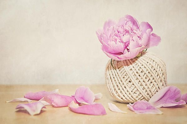 Pink peony and the thread ball. Still life image of a pink peony in a thread ball with a texture applied.  Copyright: Cristina Velina.