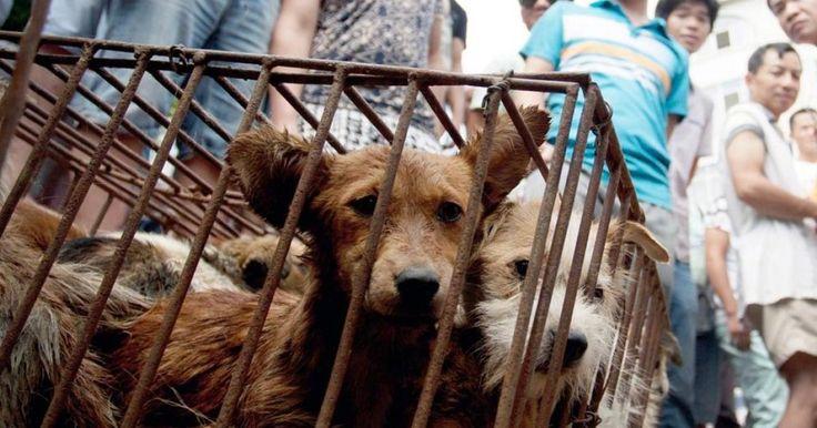 NO a la Exposición Mundial Canina del 2019 en China