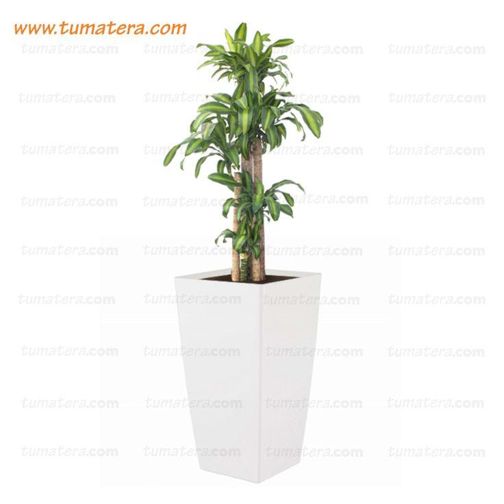 Encuéntralas en: https://www.tumatera.co/products/combo-piza-61cm-con-palo-de-brasil/
