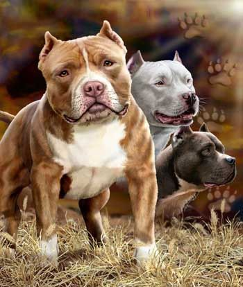 Pitbulls Dog Signature Queen Blanket - Free Shipping in the Continental US!