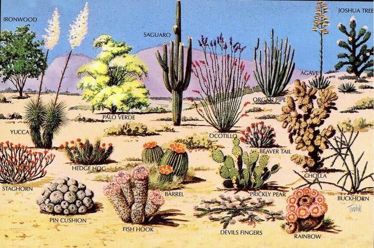 Sonoran Desert Ecosystem : Historical State of Sonoran Desert Ecosystem