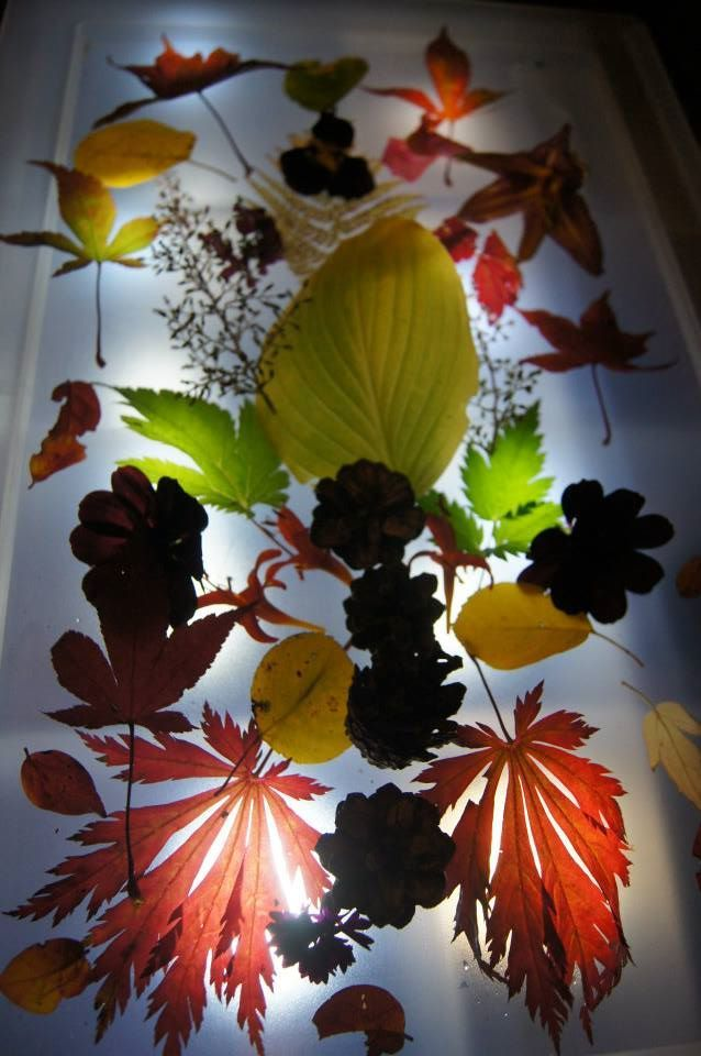 It's a beautiful way to explore the leaves and the light table.
