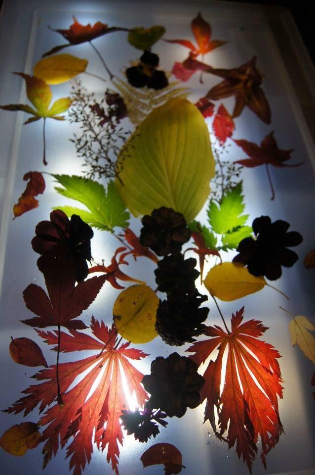 Autumn ...on the light table - Fantasifantasten ≈≈