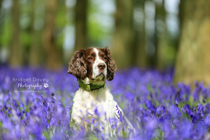 Check out today's fantastic feature by photographer Bridget Davey. We love her use of a natural backdrop and Bluebells! http://buff.ly/1KisVag #petlovers #petphotography