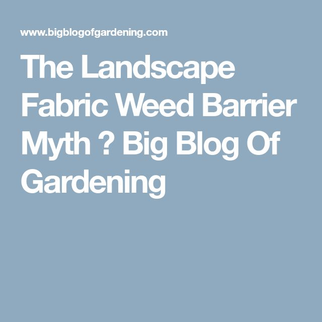 The Landscape Fabric Weed Barrier Myth ⋆ Big Blog Of Gardening