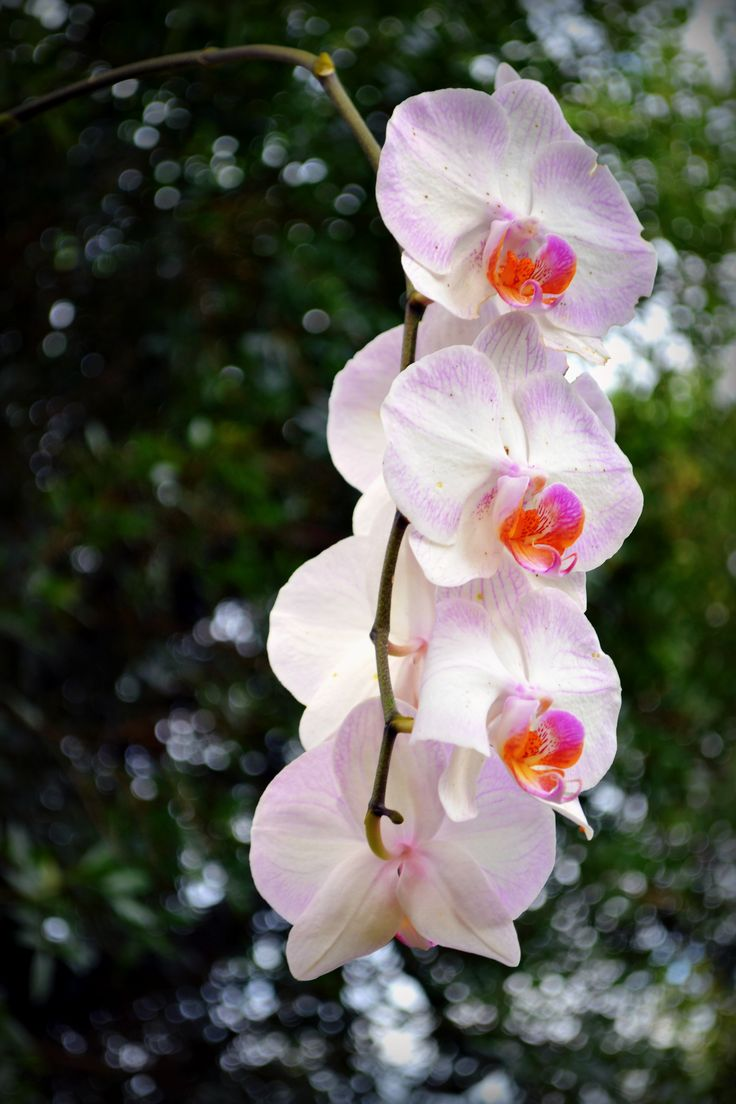 best orchids images on pinterest orchid flowers plants and flowers