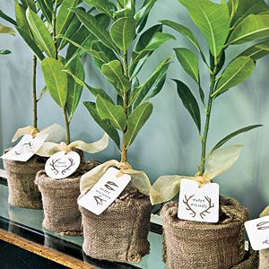 Christmas Luncheon party favors:  an herb in a pot, neatly covered in burlap, tagged with a personalized Gift Card tied with a pretty, sheer ribbon.  If you prefer adding a little color, try a gingham red & ivory check ribbon... Photo from Southern Living