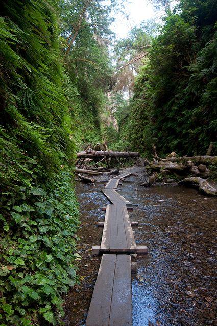 fern canyon loop, prairie creek redwoods state park • near orick, humboldt county