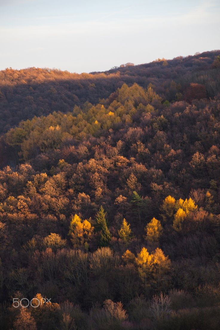 Natural gold - Autumn trees in warm golden tones © Michaela Smidova