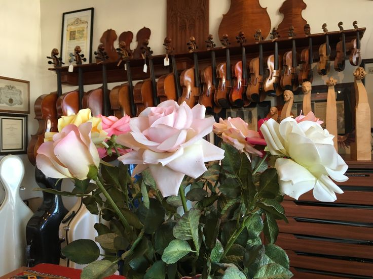 There are many beautiful things to look at in our violin shop. #violins #violas #cellos #roses #flowers #violinshop #beautiful