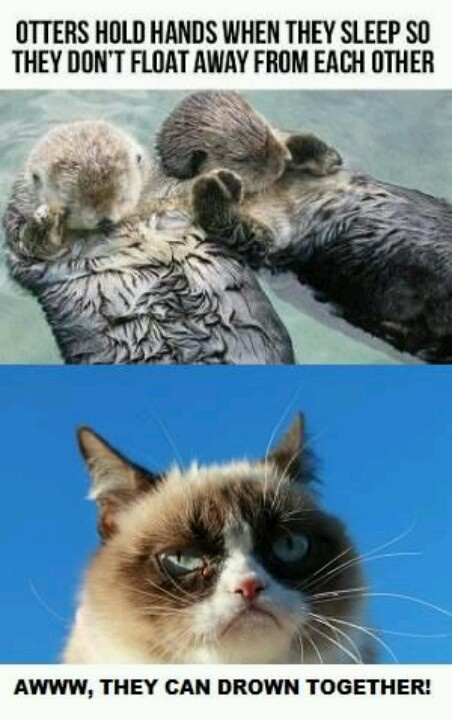 Otters:)