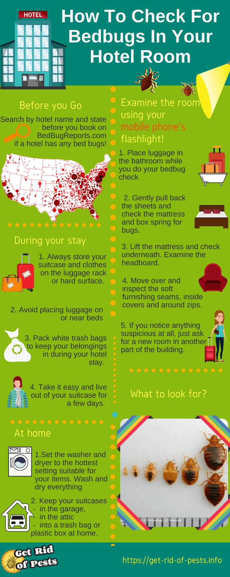 41 best bed bug infographic images on pinterest bed bugs info