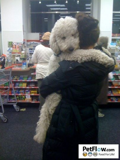 12 More Photos of HUGE Dogs Who Love To Be Carried