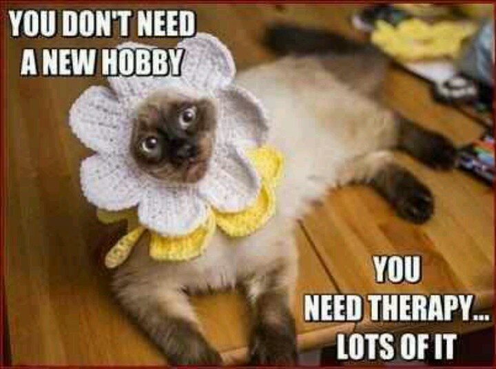 funny cat dressed up - photo #29