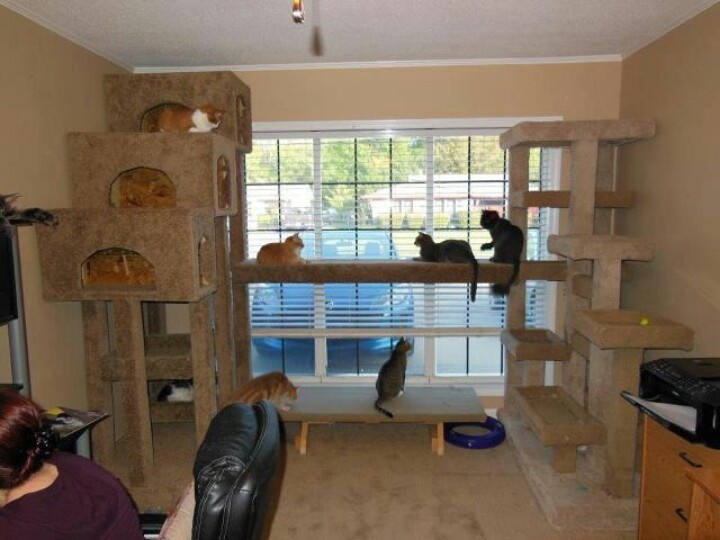 17 best images about cool make homemade cat condo on for Make a cat condo