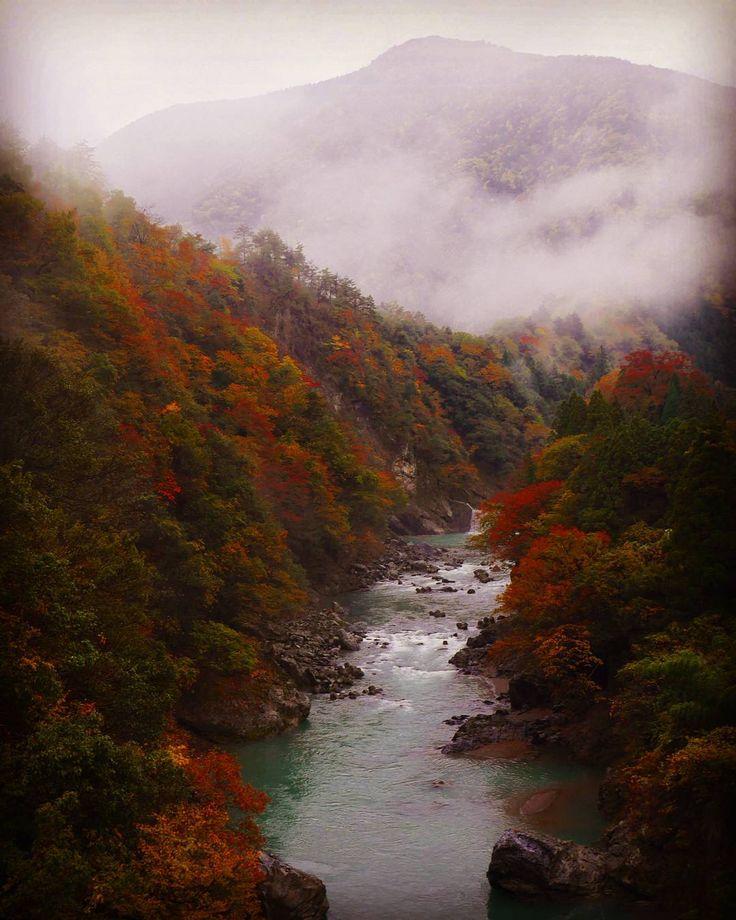 #朝日 #紅葉 #山 #谷 #渓谷 #紅葉狩り #autumn #mountain #river #川 #instagram #instagramers #instagramhub #f4f