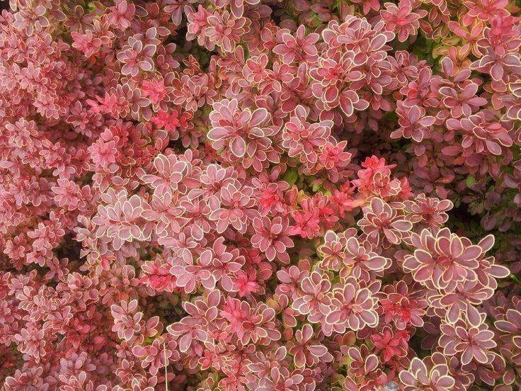 Jesień w naszym ogrodzie