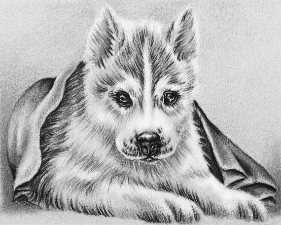 Husky Dog Coloring Art Coloring Pages Kids Grayscale