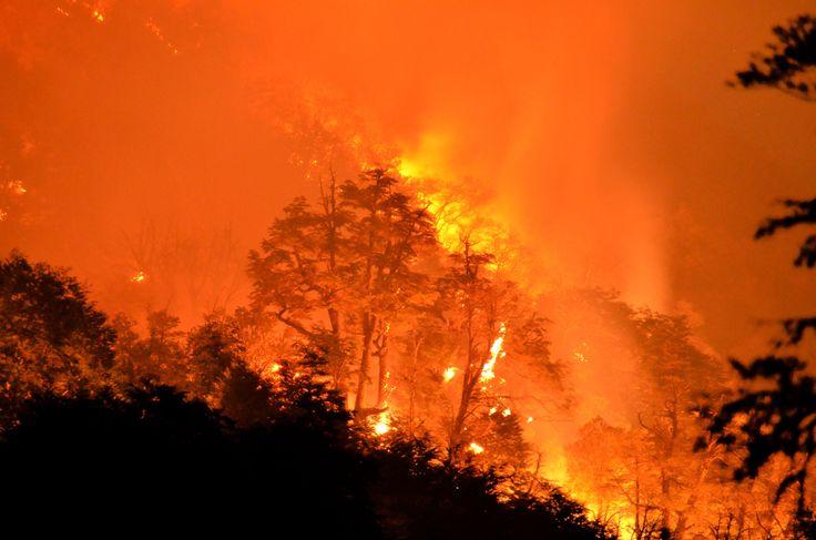 Pemandangan kebakaran hutan di Taman NasionalConguillo. Kebakaran hutan melanda daerah sebelah selatan Chili yang dilanda kekeringan, melibas ratusan spesies tanaman, dan kini mengancam keselamatan para binatang penghuni taman nasional ini.